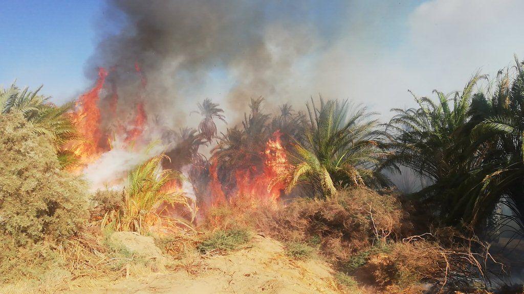 انتشار الحرائق بصورة متكررة فى النخيل بالوادى الجديد  (3)