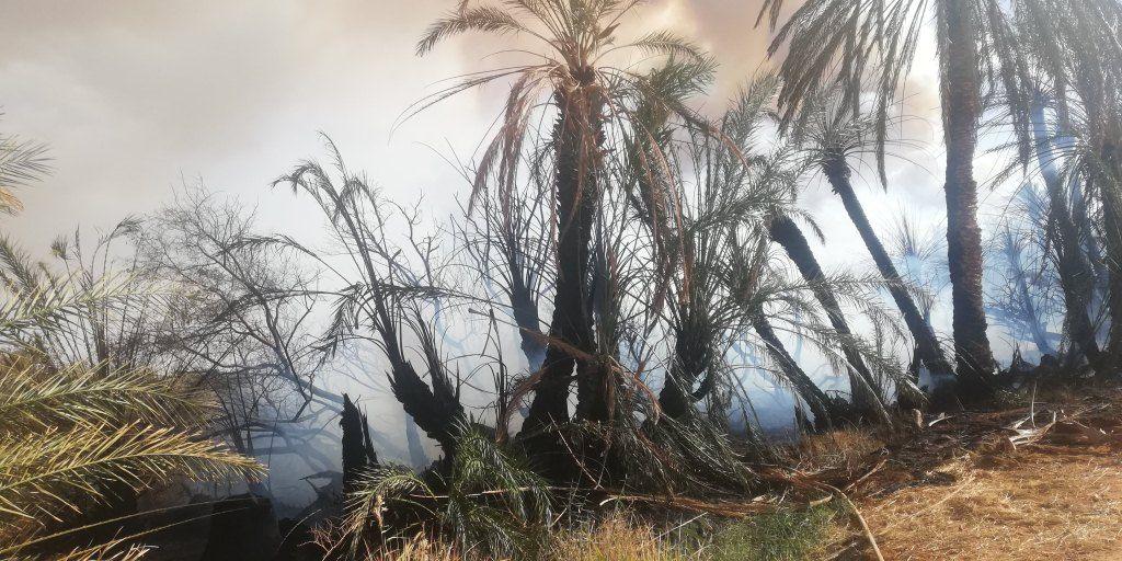 انتشار الحرائق بصورة متكررة فى النخيل بالوادى الجديد  (2)