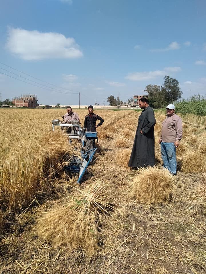 الفلاحون خلال حصاد القمح