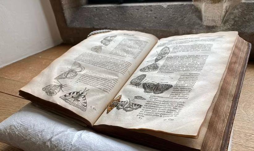 صورة للكتاب مفتوح والفراشة بداخلة