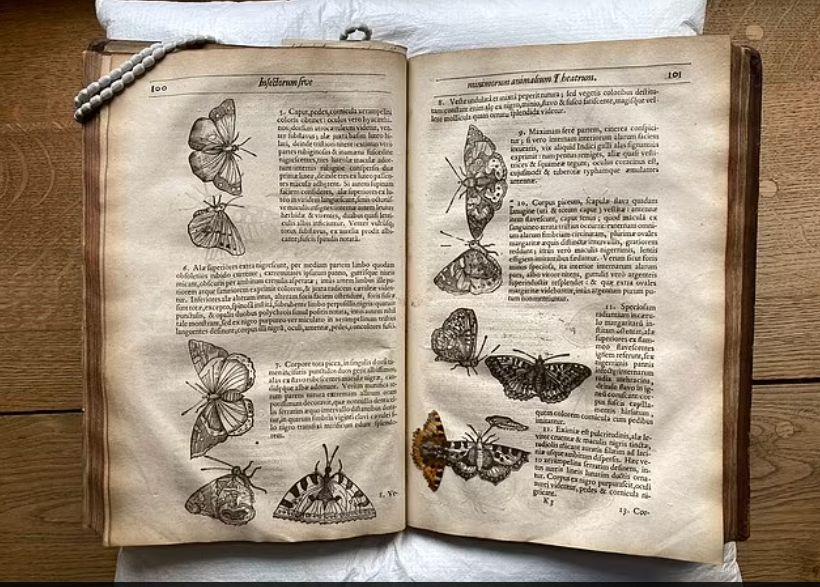 الفراشة داخل الكتاب وهو مفترح