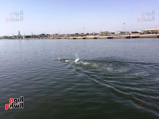 السباح العالمى سيد الباروكى (10)