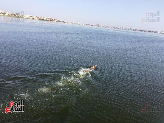 السباح العالمى سيد الباروكى (11)