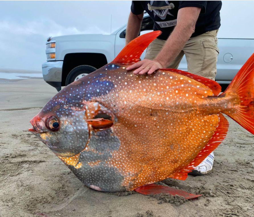 حجم السمكة