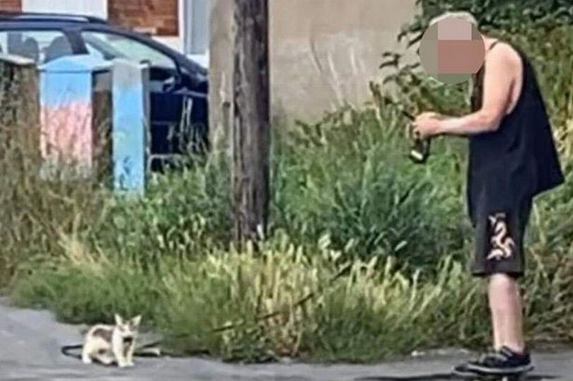 الرجل برفقة أحدي القطط