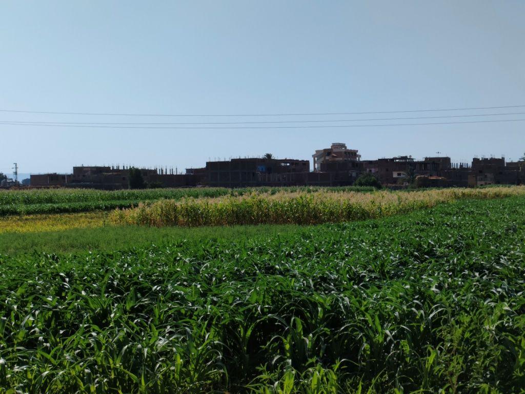 قرية العقاربة من الطريق الزراعى بالأقصر